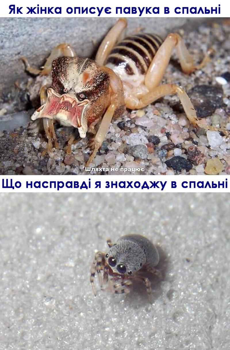 Як жінка описує павука в спальні
