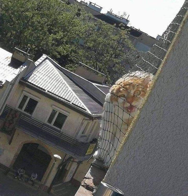 Моторошний кіт завжди злий