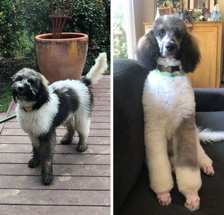 Здається, що це зовсім інший пес