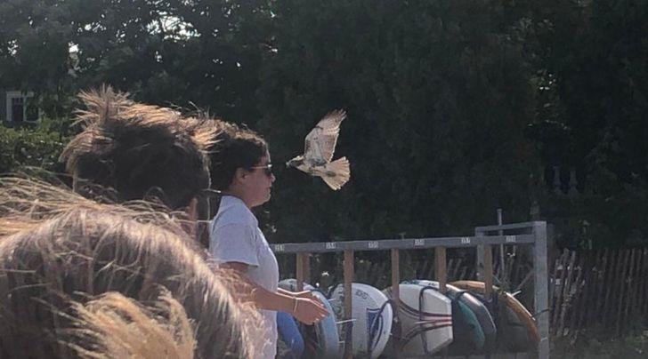 Птах збився з курсу
