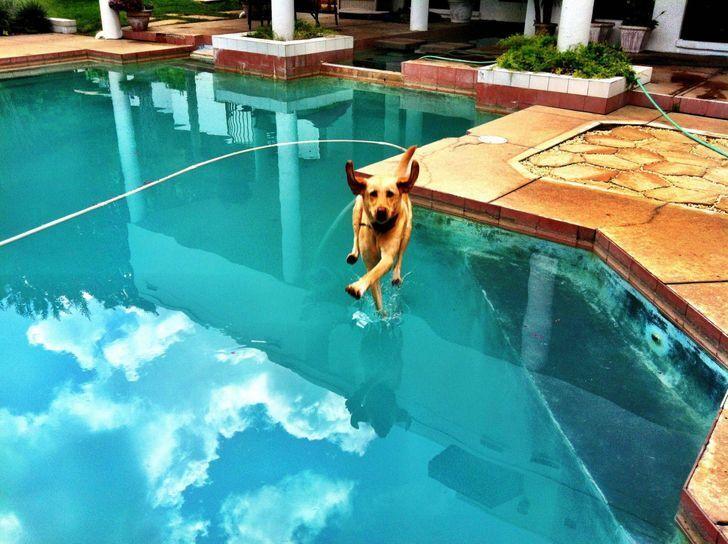 Пес пірнув у басейн