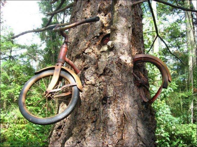 велосипед дерево