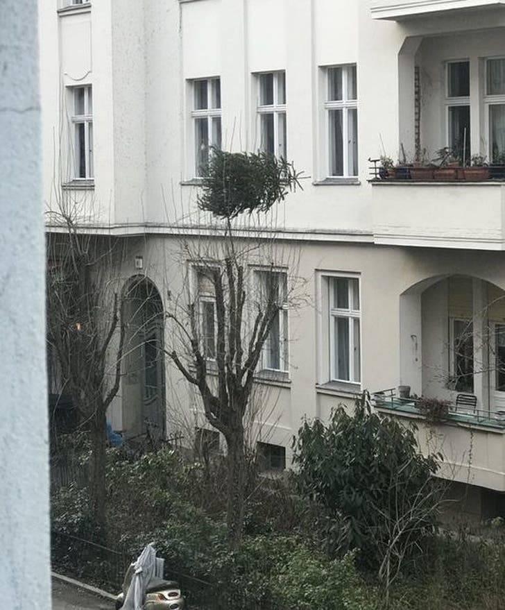 Сусіди викинули ялинку з вікна