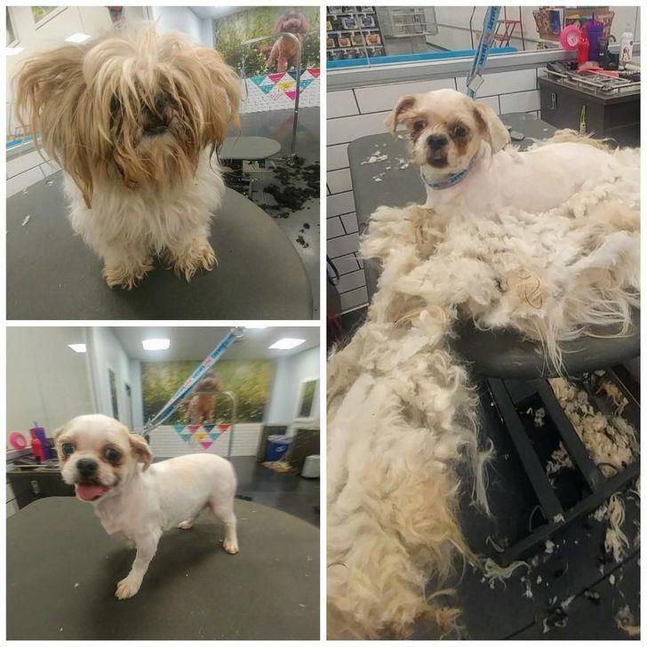 Пес з шерстю втратив половину ваги