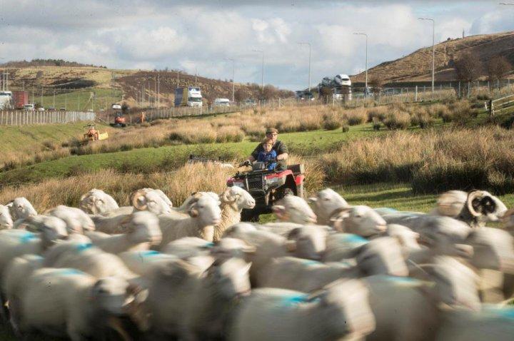 Як живе найвпертіший фермер у світі (фото)