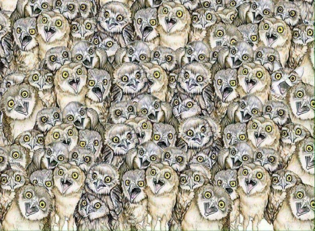 Лише найуважніші зможуть відшукати на цій картинці кота. А ви належите до них?