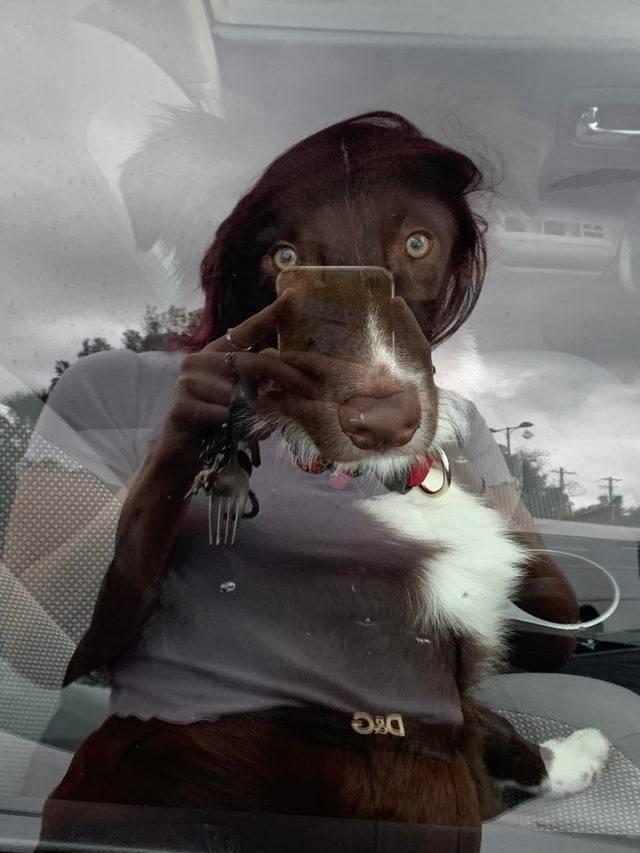 Пес робить селфі в дзеркалі