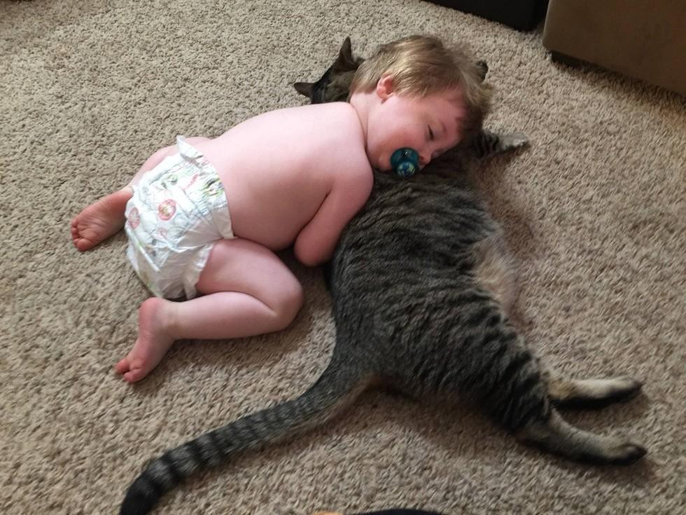 Теперь они всегда спят вместе, и даже когда Ас подрос, кот остается его любимой подушкой