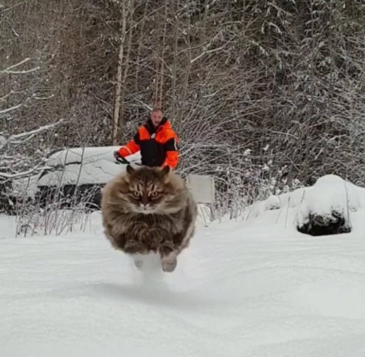 Чоловік осідлав кота