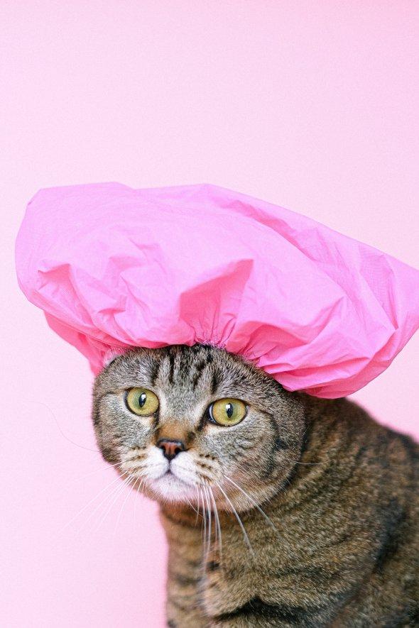 """""""Відбиток носа"""" в кожної кішки настільки ж унікальний, як відбитки пальців у людини"""