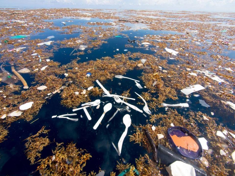 Тихоокеанське сміття
