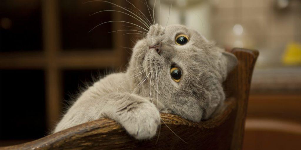Знайдіть котиків! 10 фотографій для перевірки уважності