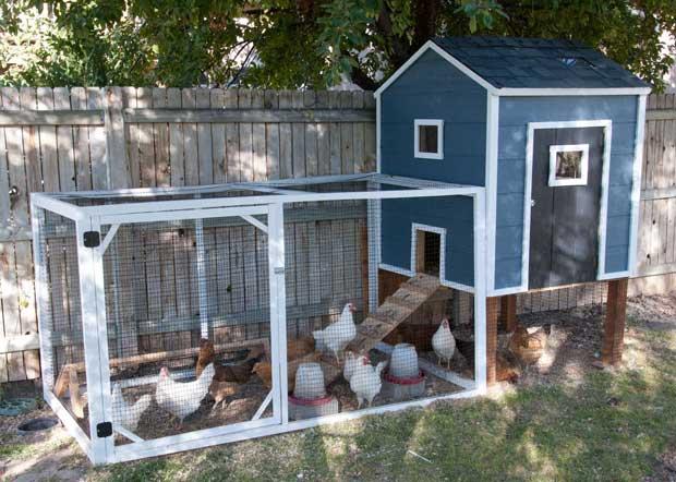 chicken-coop (16)