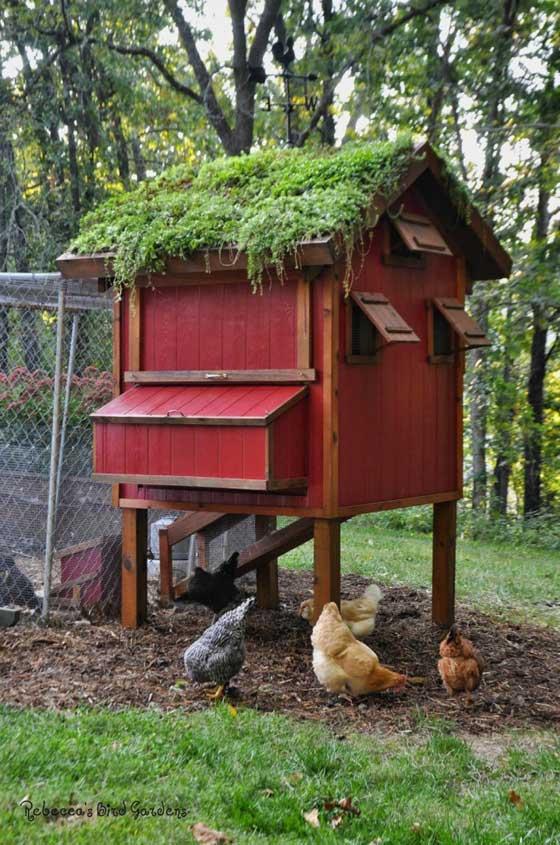 chicken-coop (6)
