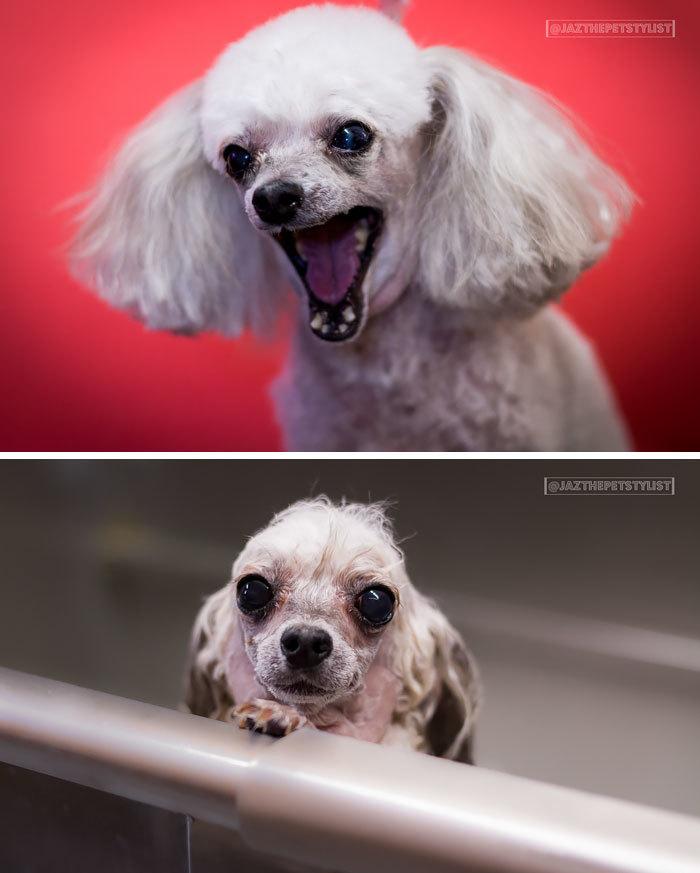 Фото собак до і після купання. Це справді смішно! - 10