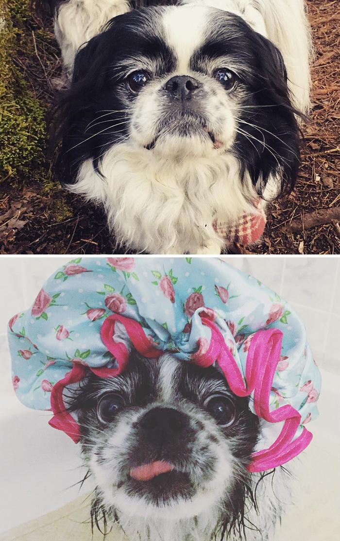 Фото собак до і після купання. Це справді смішно! - 19