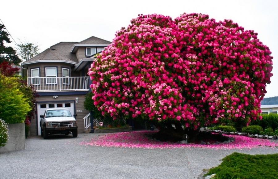 15 найкрасивіших дерев в світі - 1