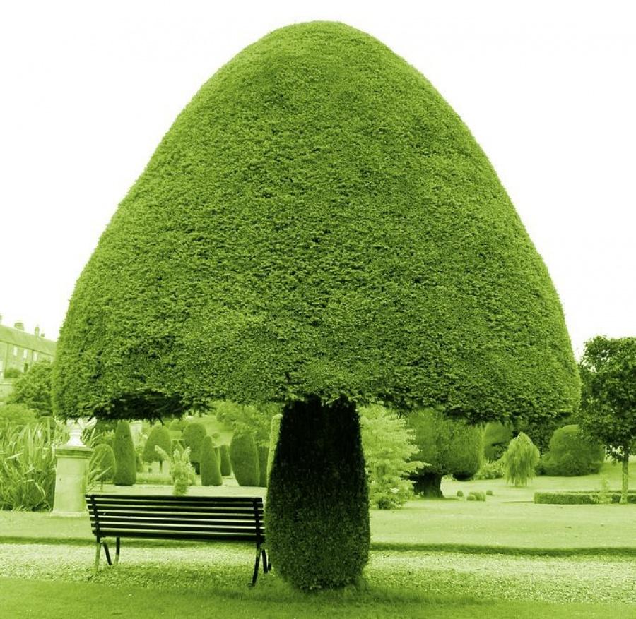 15 найкрасивіших дерев в світі - 2