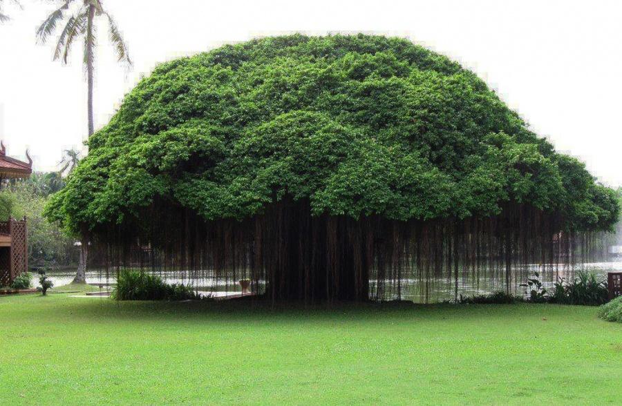 15 найкрасивіших дерев в світі - 4