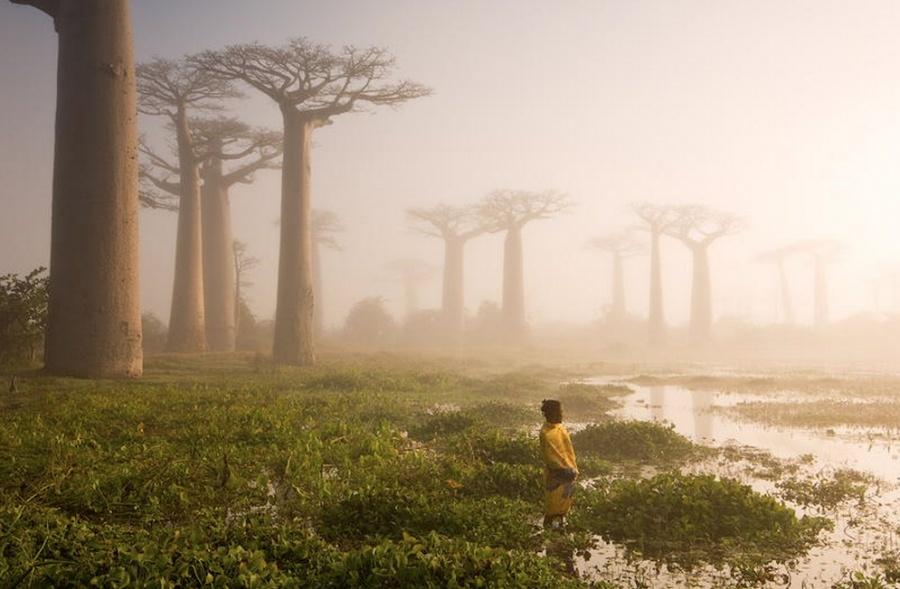 15 найкрасивіших дерев в світі - 6