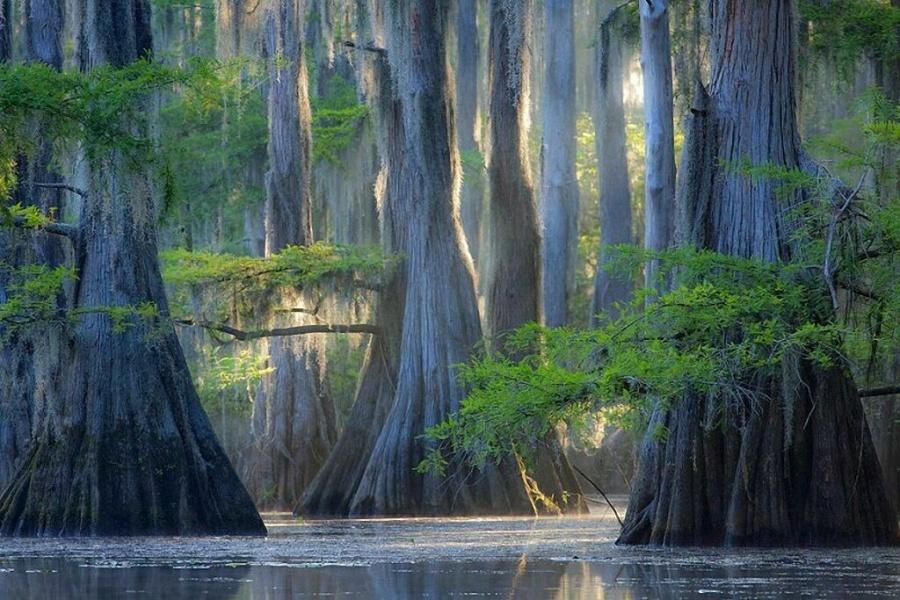 15 найкрасивіших дерев в світі - 7