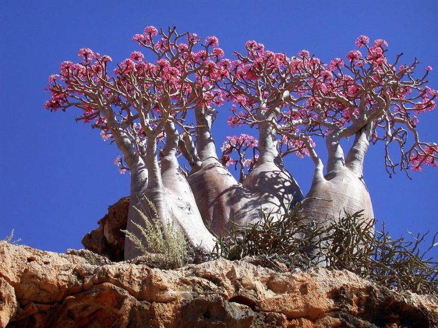 15 найкрасивіших дерев в світі - 9