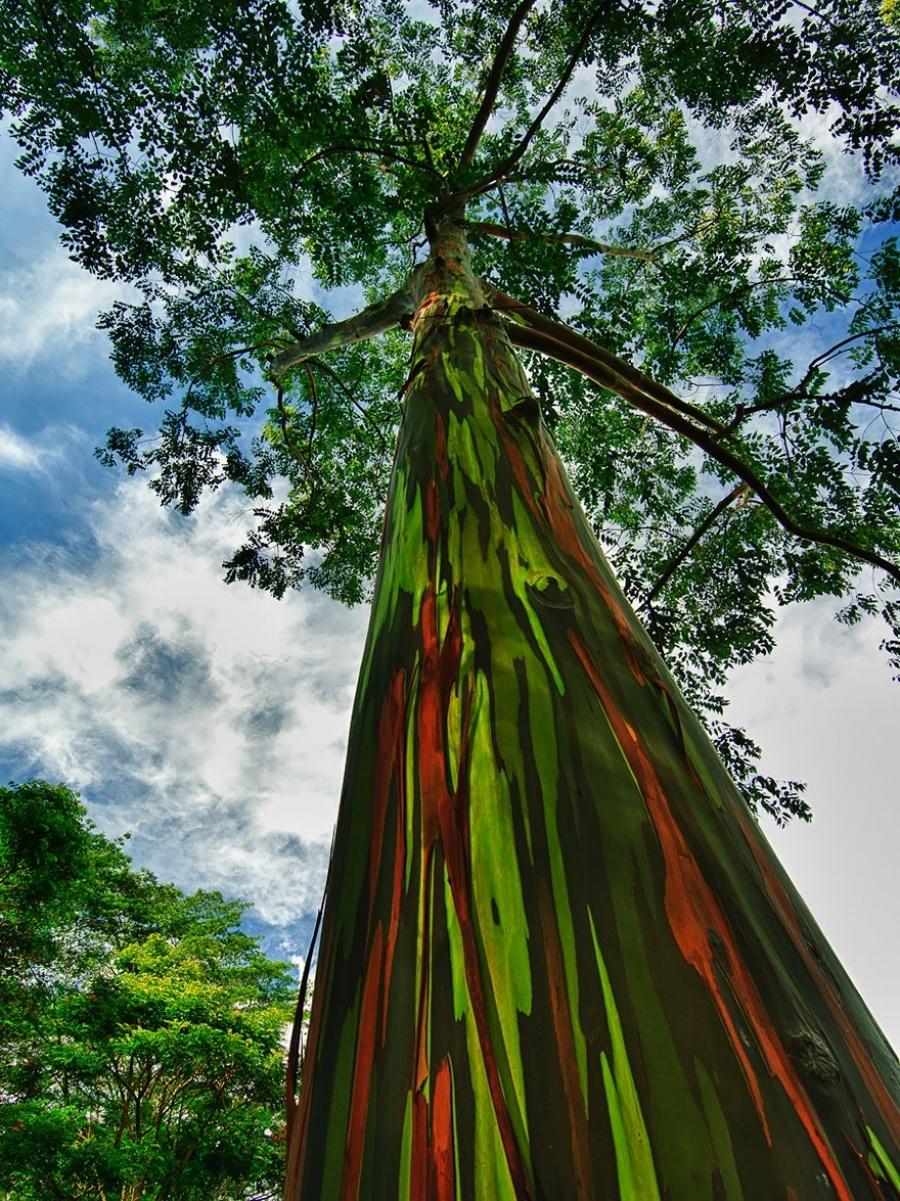 15 найкрасивіших дерев в світі - 10