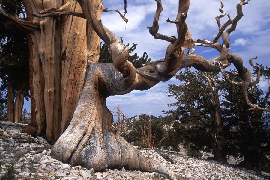 15 найкрасивіших дерев в світі - 12