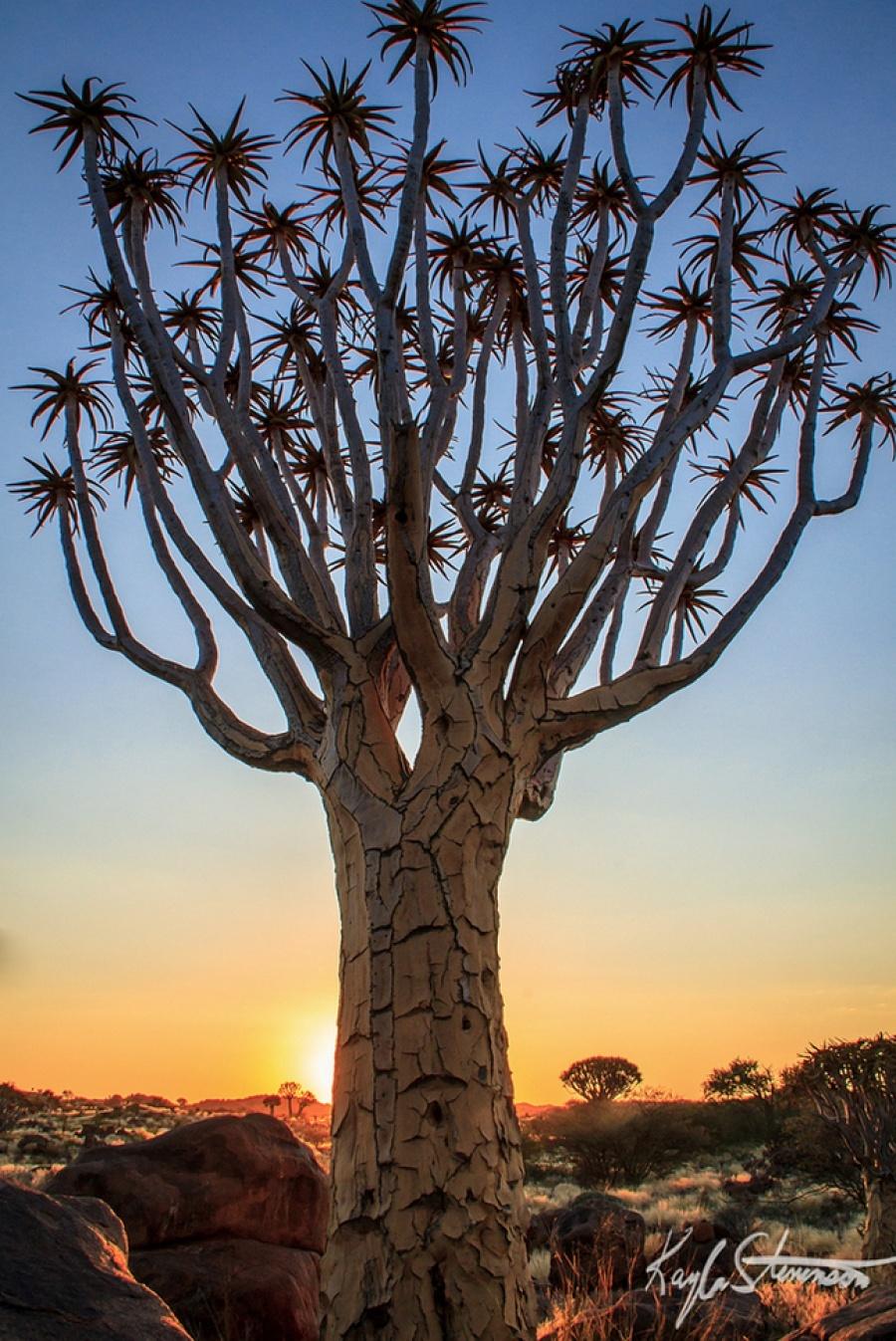 15 найкрасивіших дерев в світі - 13