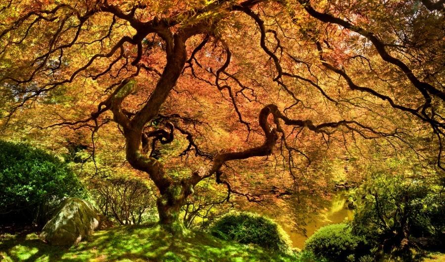 15 найкрасивіших дерев в світі - 14