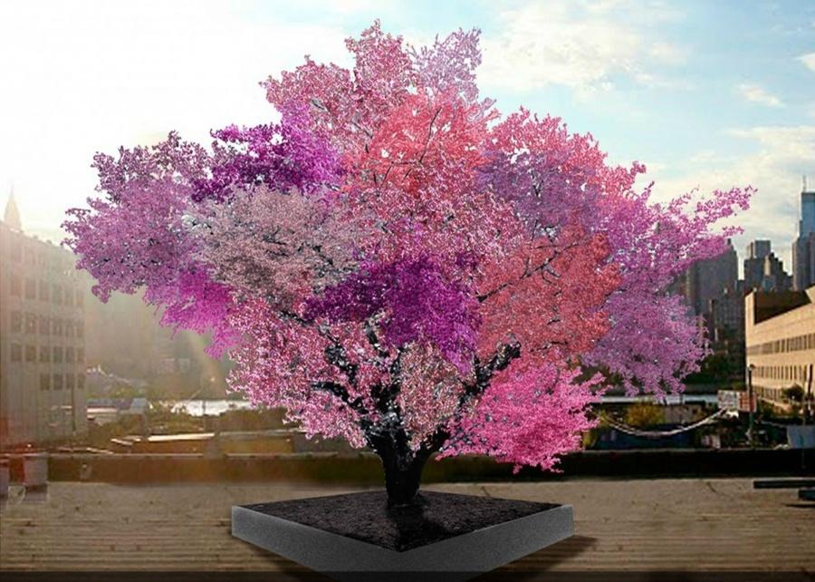 15 найкрасивіших дерев в світі - 15