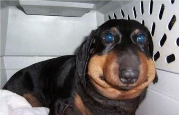 11 собак, які зрозуміли, що бджіл краще не їсти - 11
