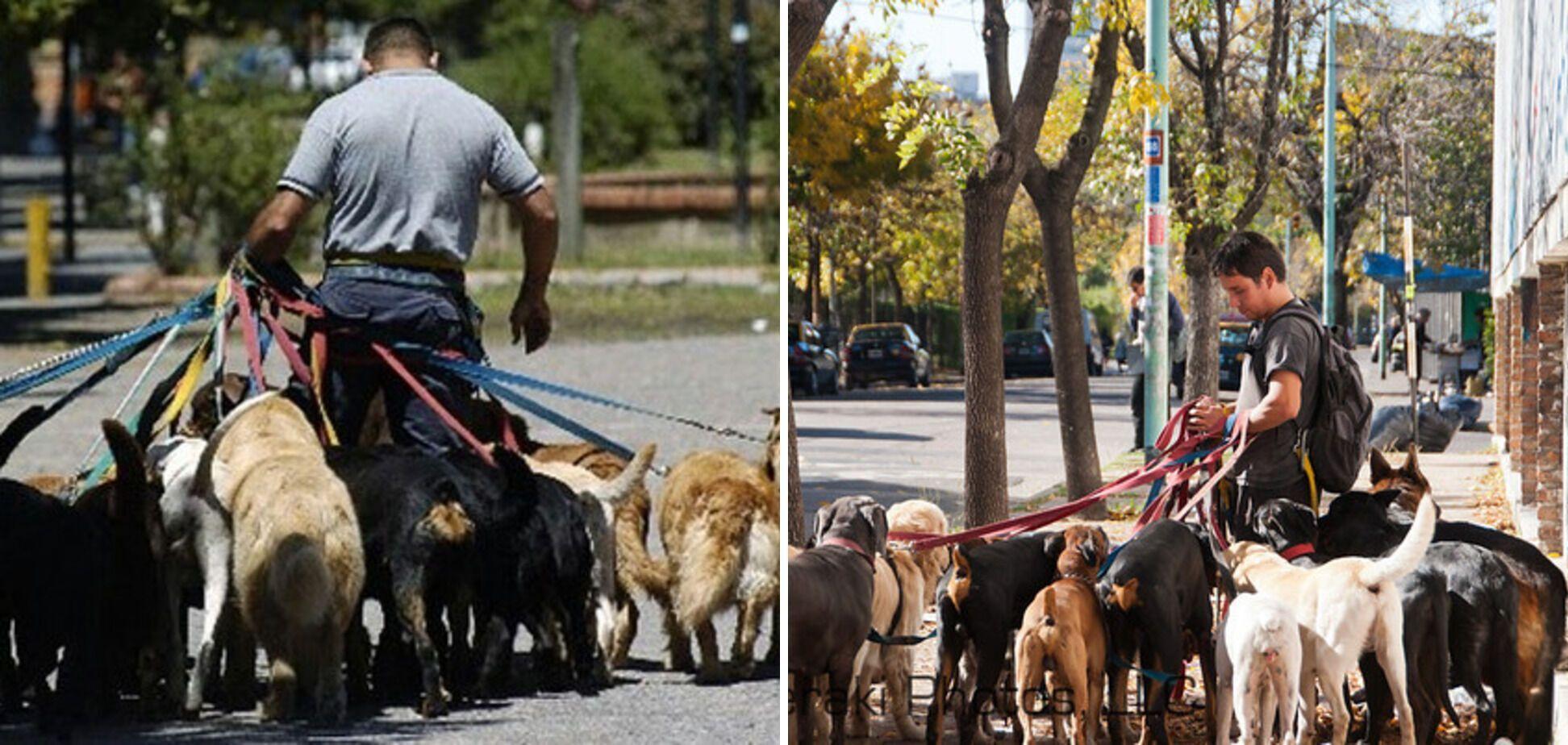 В Аргентині платять гроші за вигул тварин