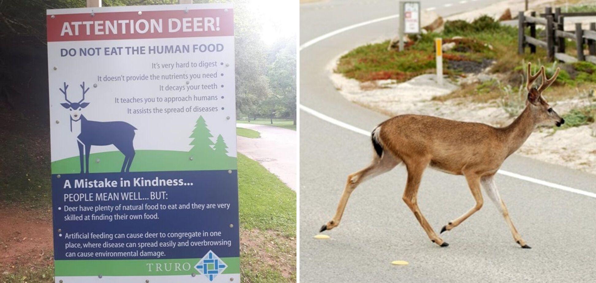 В Канаді є правила для оленів