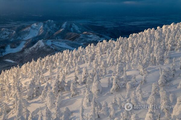 Українські курорти почало засипати снігом: з'явилися яскраві фото