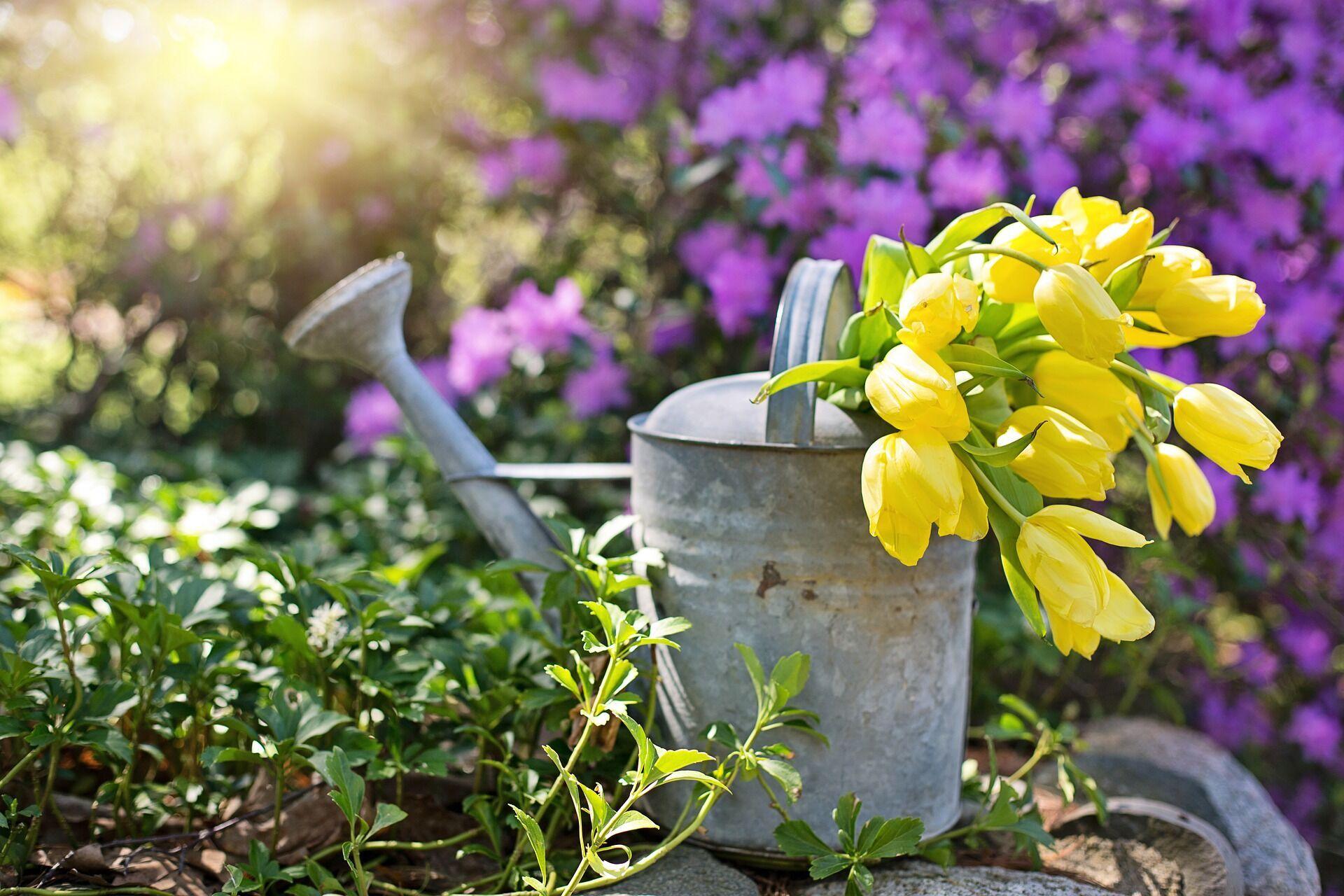 Місячний посівний календар на червень 2021 року допоможе розпланувати роботи в саду і городі