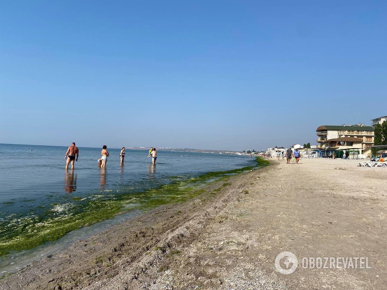 Узбережжя покрите водоростями і мертвими медузами