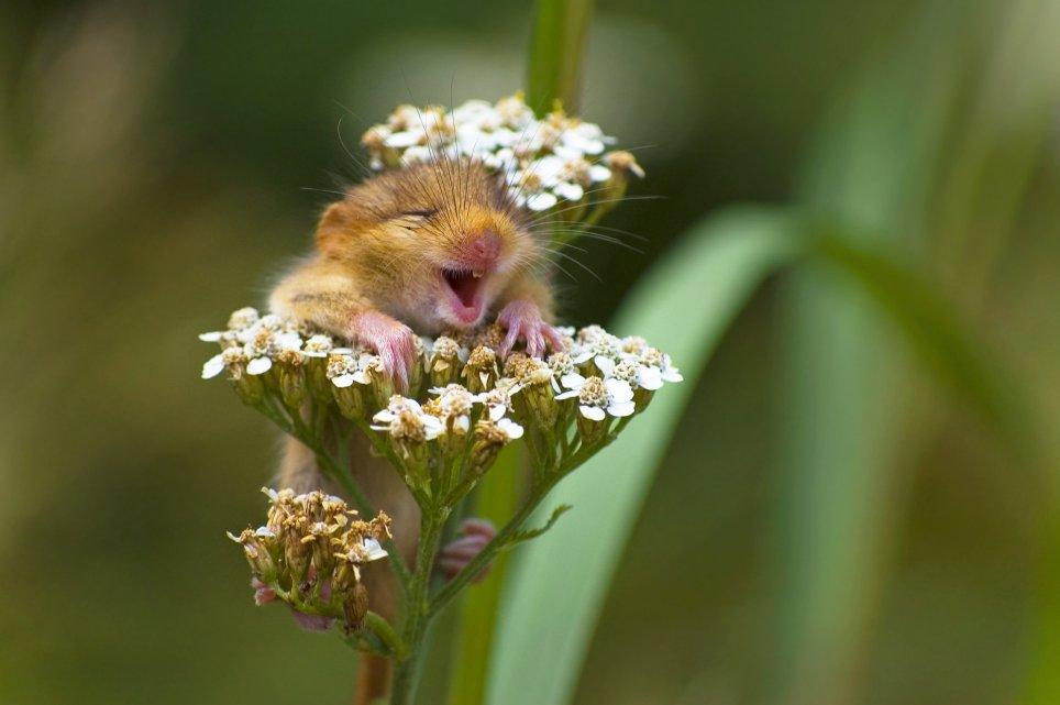 Найсмішніші фотографії тварин планети (фото