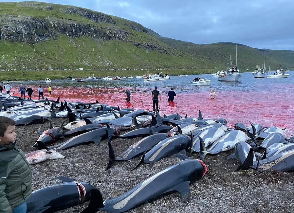Вода в морі почервоніла від крові дельфінів