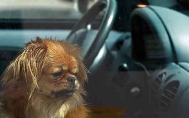 Ось чому НІКОЛИ не можна залишати собаку в машині у спекотний день!